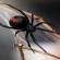 فيديو | د. مصطفى محمود: العنكبوت حيوان سافل !