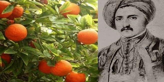حكاية اليوسف أفندي .. قصة من تاريخ الزراعة في مصر