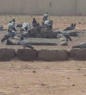 قبر سيدنا حمزة بن عبد المطلب بالقرب من جبل أحد بالمدينة المنورة