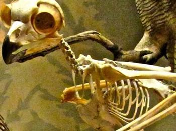 العثور على الطائر المرعب الملقب بقناص الأرض في الأرجنتين
