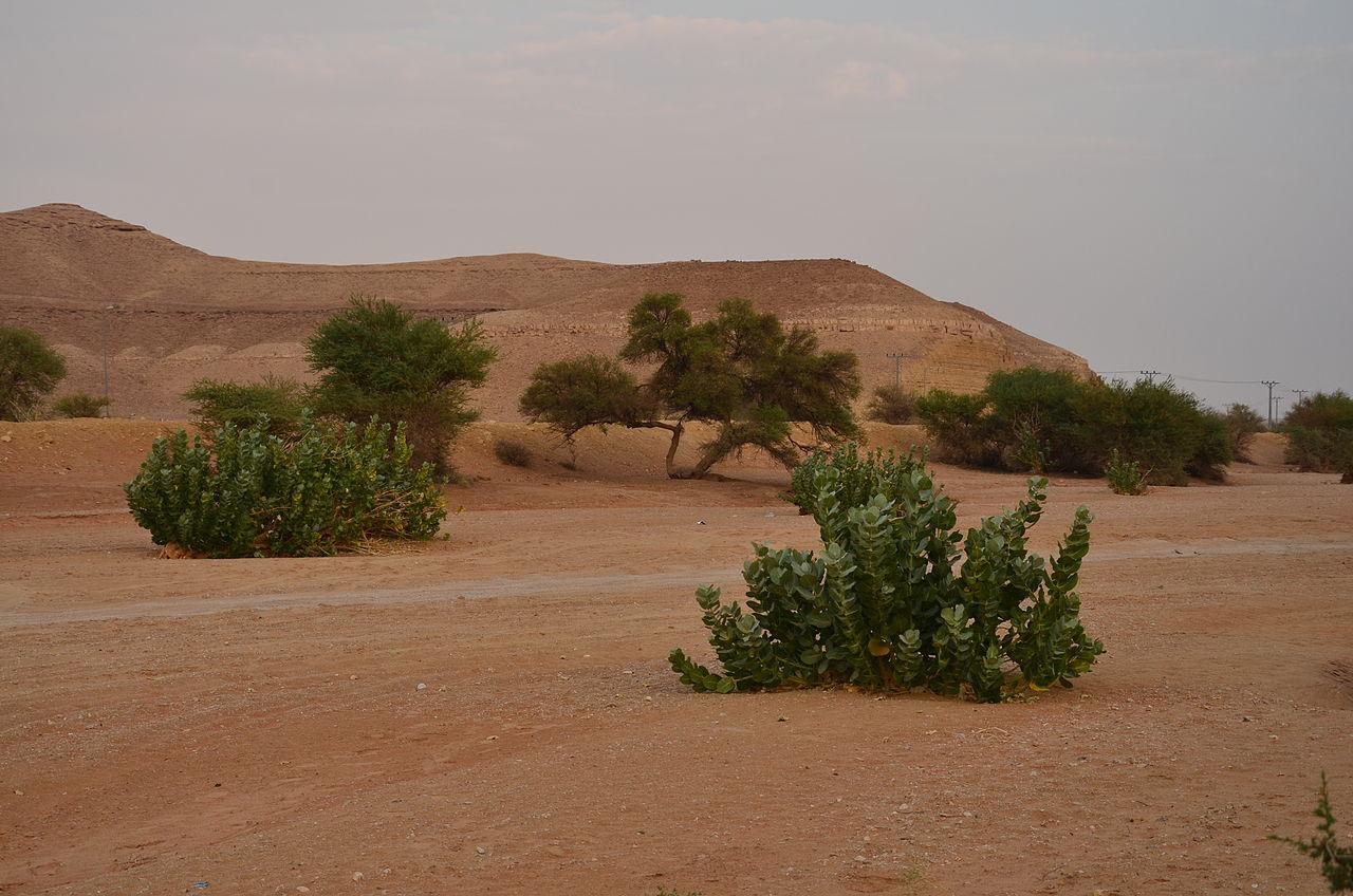قرية العيينة التاريخية