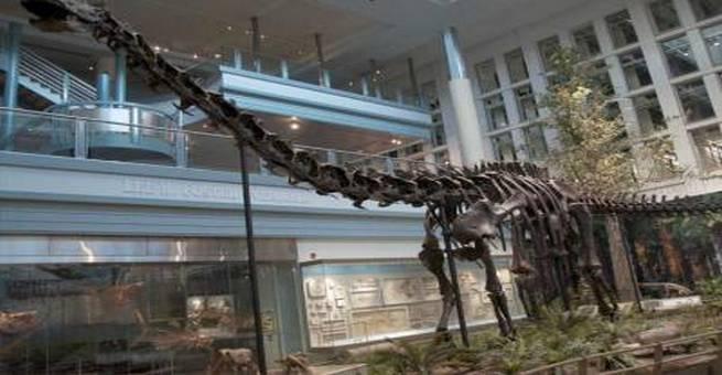 عرض هيكل عظمي لديناصور كامل في متحف التاريخ الطبيعي بنيويورك